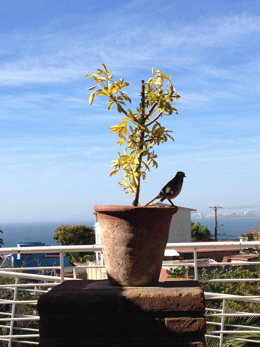 I made friends with this bird at Pablo Neruda's house.