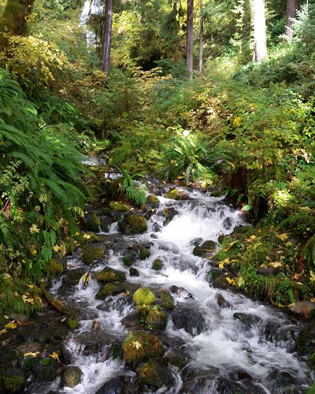 Exploring my favorite place on Earth. Olympic National Park. . . . #livingwithlocks #blogging #travelblogging #photography #naturephotography #nature #wanderlust #waterfalls #olympicpeninsula #olympicnationalpark #pnw #washington #explore #discoverpnw #pacificnorthwest #water #green #hohrainforest #rainforest #forest #hiking #outdoors #gooutdoors #adventure #live #natureza #trees