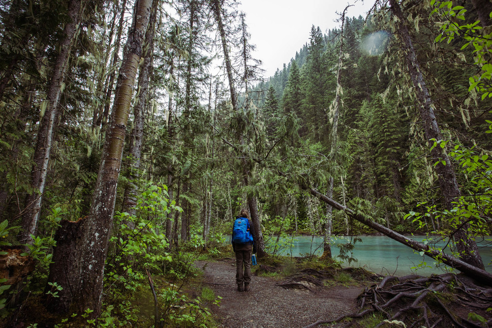 The area around Mt. Robson gets significantly more precipitation than the rest of the Rockies, making the vegetation more akin to the kind you see along the B.C. coast. Plenty of massive lichens and old-growth cedars.