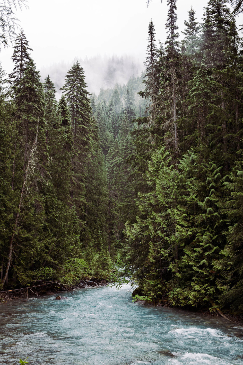 Robson River is never far from the trail, with a number of rapids thundering along the way.