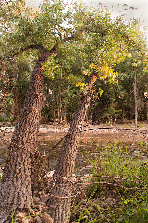 Resilient Tree, Poudre River Trail    Nikon D3200 • Nikon 18-55mm lens • 18mm • F/22 • 1/6s • ISO 3200