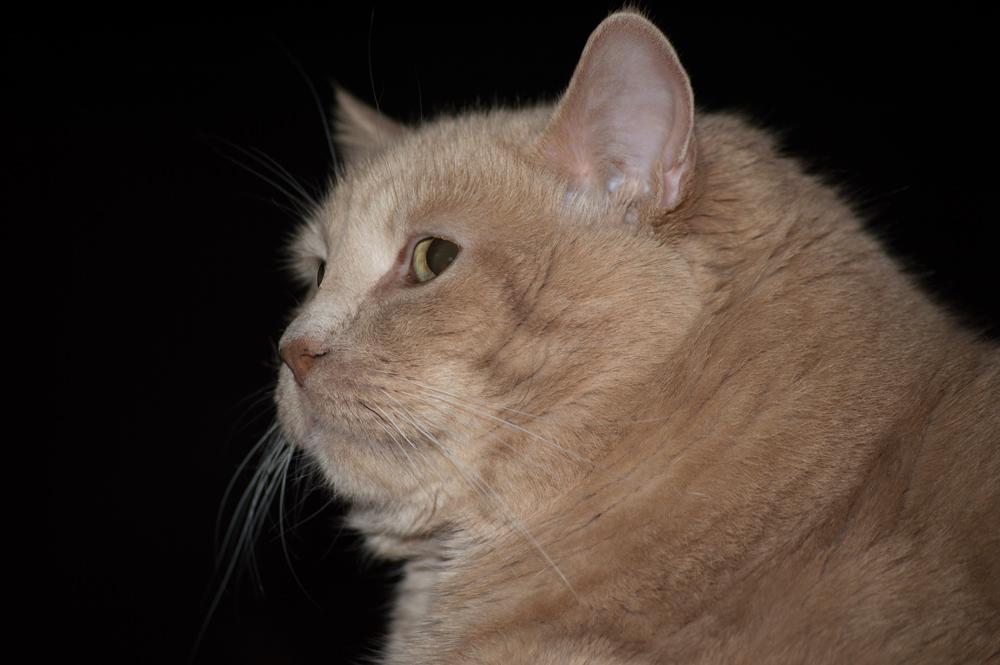 Yogi the Cat    Nikon D3200 • Nikon 55-200mm lens • 90mm • F/4.5 • 1/60s • ISO 400