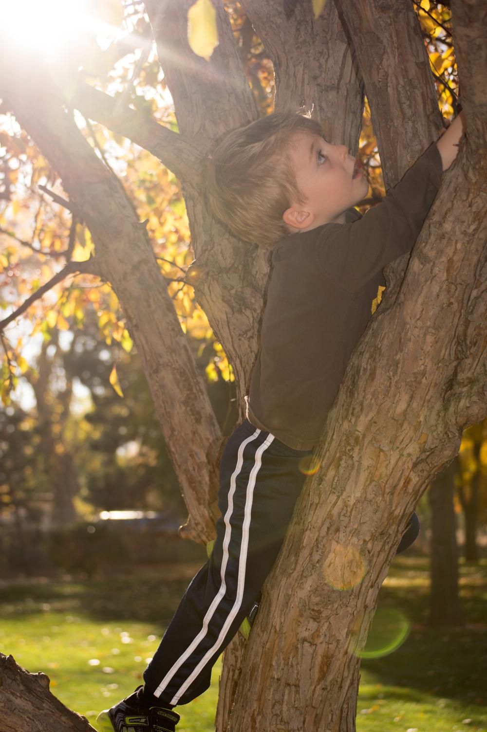 Desmond Climbs a Tree  Nikon D3200 • Nikon 55-200mm lens • 55mm • F/4.5 • 1/200s • ISO 100