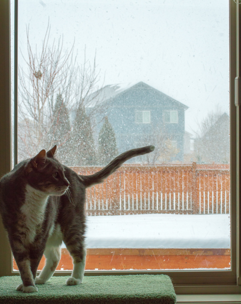 Zeke Goes Poetic on Snowflakes  Nikon D3200 • Nikon 55-200mm lens • 55mm • F/16 • 1/125s • ISO 400