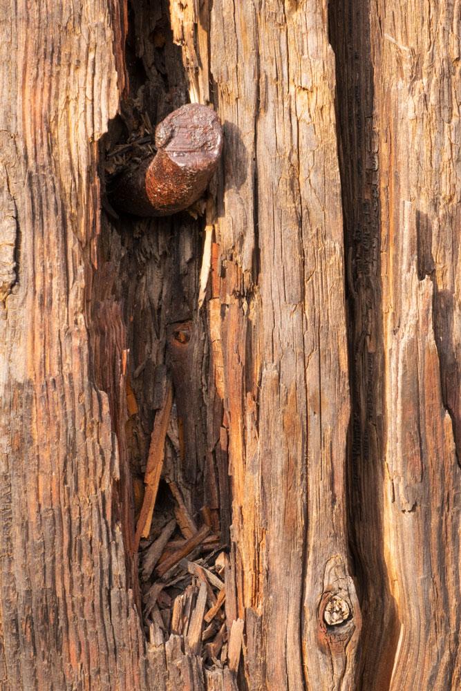 Rusted Nail in Wood    Fujifilm X-E2 • Fuji XF18-135mm lens • 70.2mm • F/22 • 1/20s • ISO 800