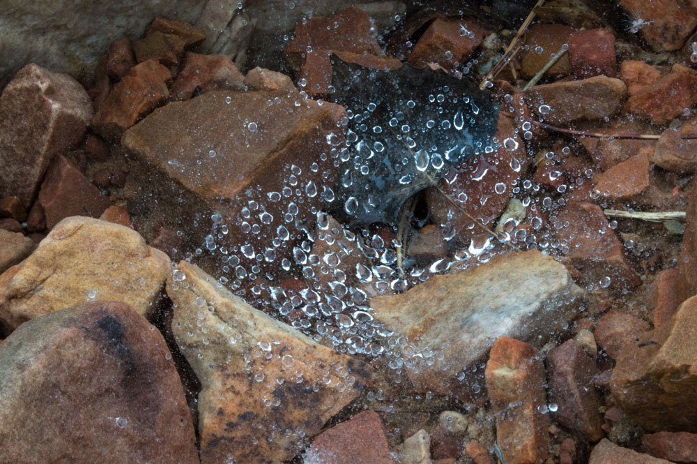 Spider's Web in Rock Pile    Fujifilm X-E2 • Fuji XF18-135mm lens • 36mm • F/22 • 1/4s • ISO 400