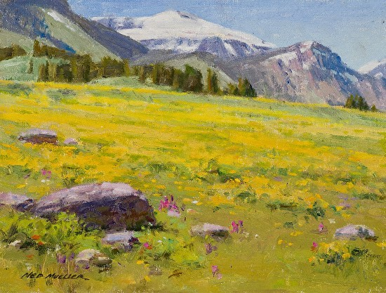 Golden Meadow - Beartooth Mountains