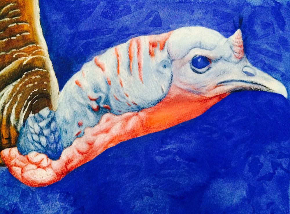 Wild Turkey, 2015, gouache