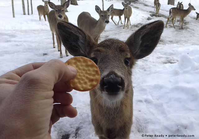 Who knew that deer love Ritz? In the Pocono Mountains, some deer are clueless as to what could get them killed. They've become so acclimated to people. The same is true for us! If we're not intentionally stopping our busyness, we wind up living in the kill zone.