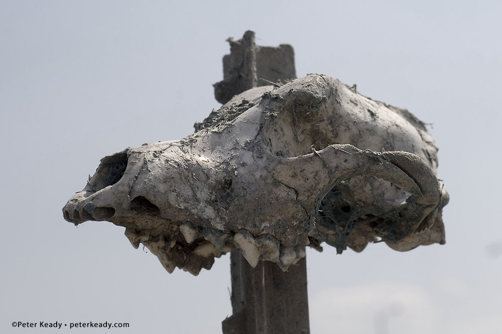 Tomorrow isn't promised. Are you living significantly today as a positive example for others? Or, are you simply strolling through life without eternity in mind? An animal skull impaled on a fence post in the Lower 9th Ward of New Orleans one year after hurricane Katrina destruction.