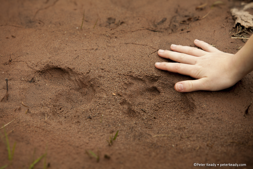 We all leave an imprint, the impression others have of us. This photo was taken on a trip with some friends to a beaver pond in NJ. Bear tracks are given size with the gentle placement of a hand.