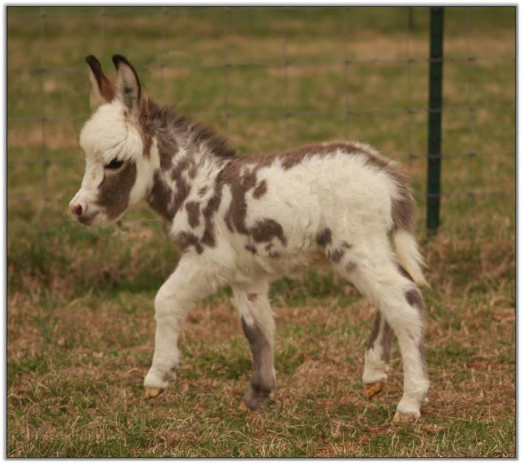 Brick foal 1.jpg