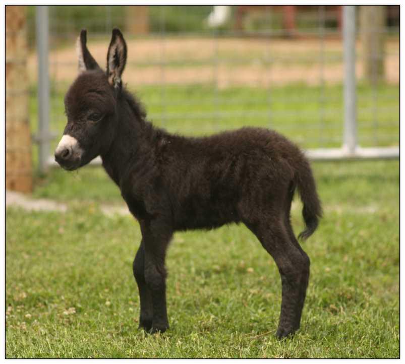 Brick foal 2.jpg