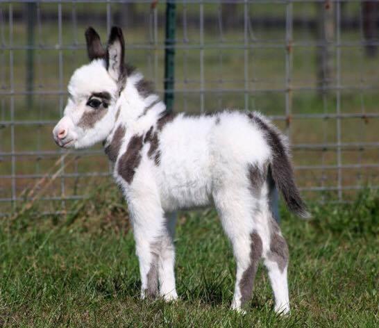 Brick foal 5.jpg