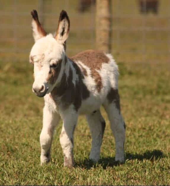 Brick foal 6.jpg