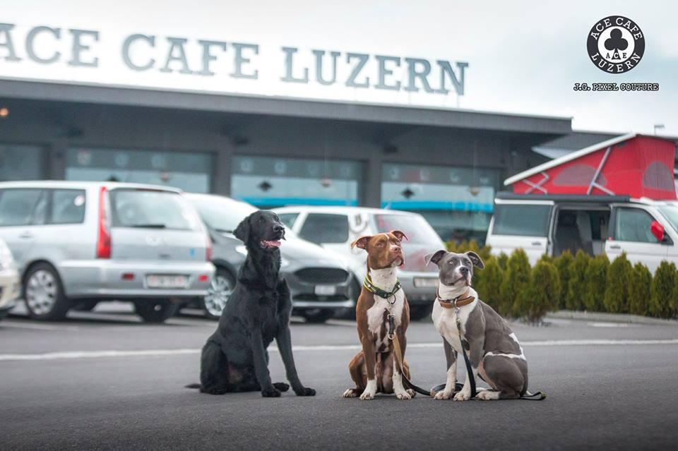 DOG & CAR - TREFFEN @ ACE LUZERN