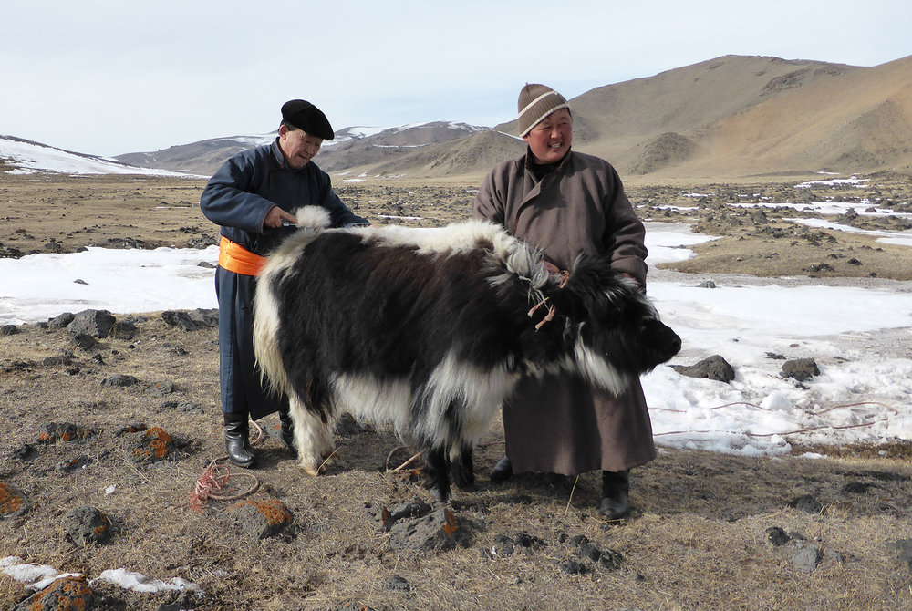 Tengri_yak_headers_mongolia.jpg
