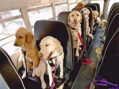 dogs on bus