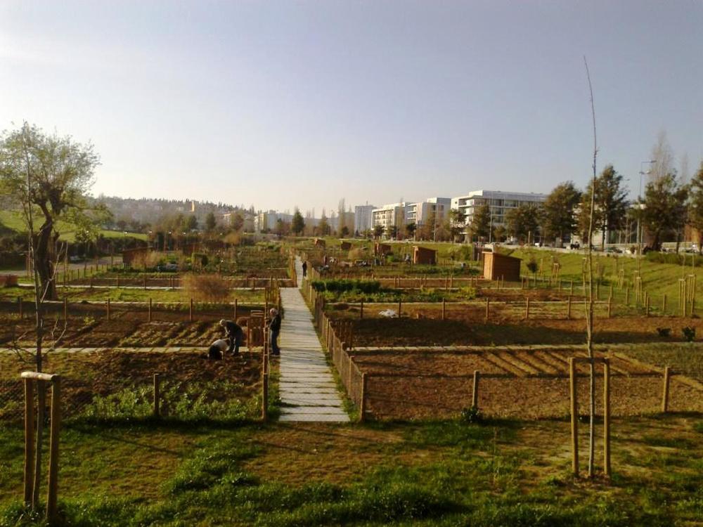 Horta em Benfica