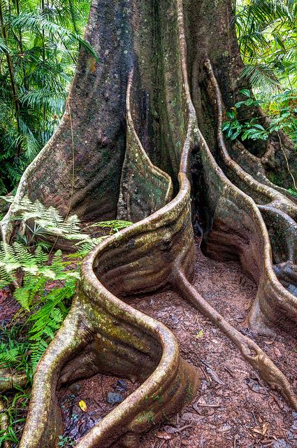 Trees of Queensland