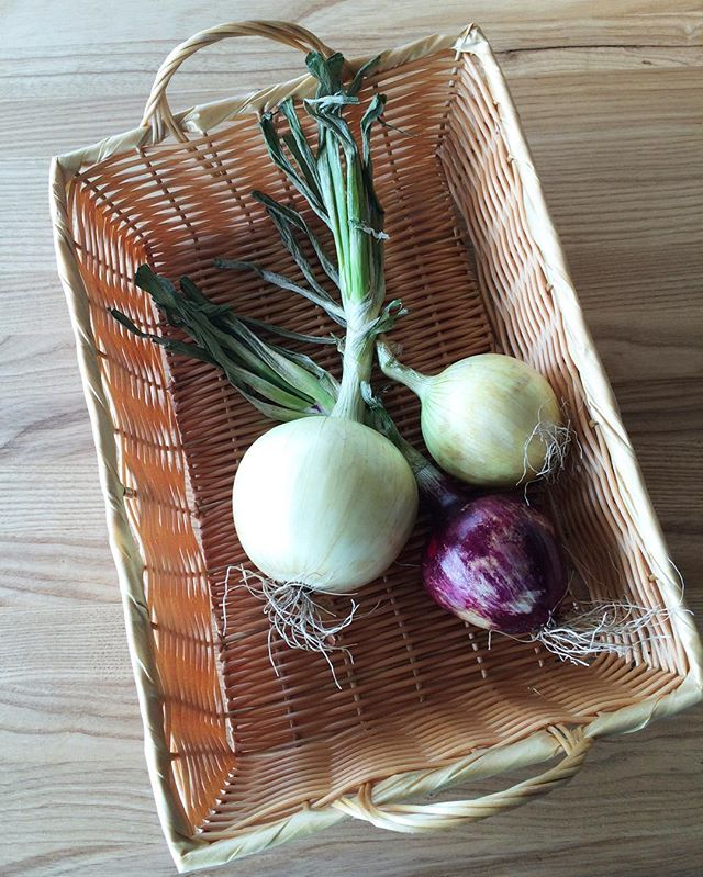 Locally grown @visserfarms onions are pretty😍
