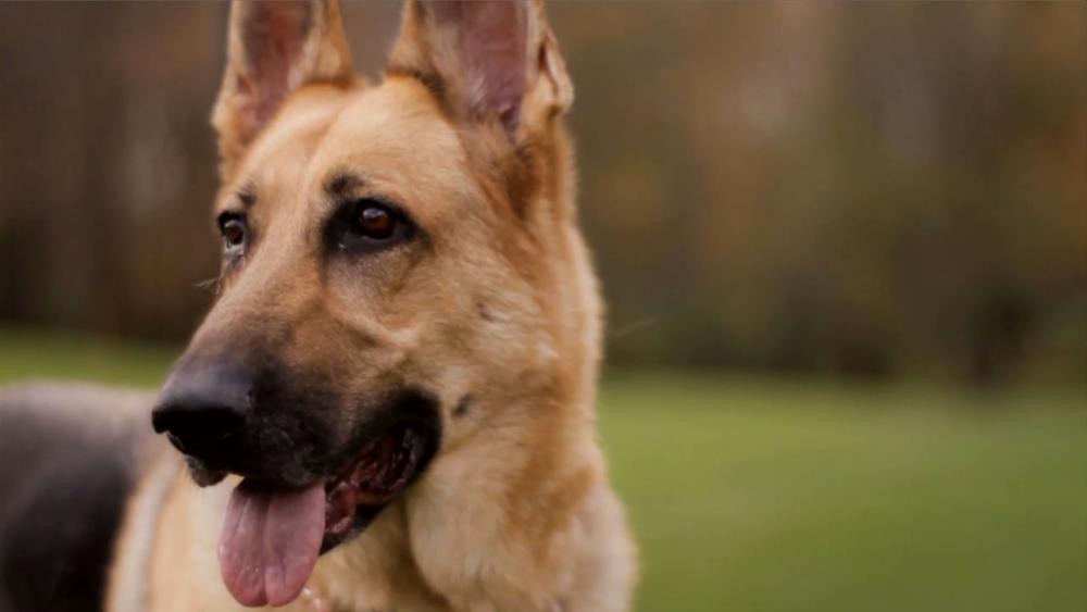 dog training syracuse ny