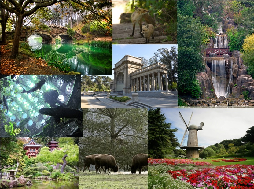 Golden Gate Park has beautiful walks, gardens, wildlife and museums.