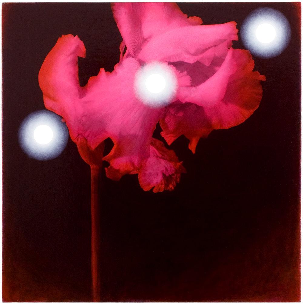 Iris #5, 2005