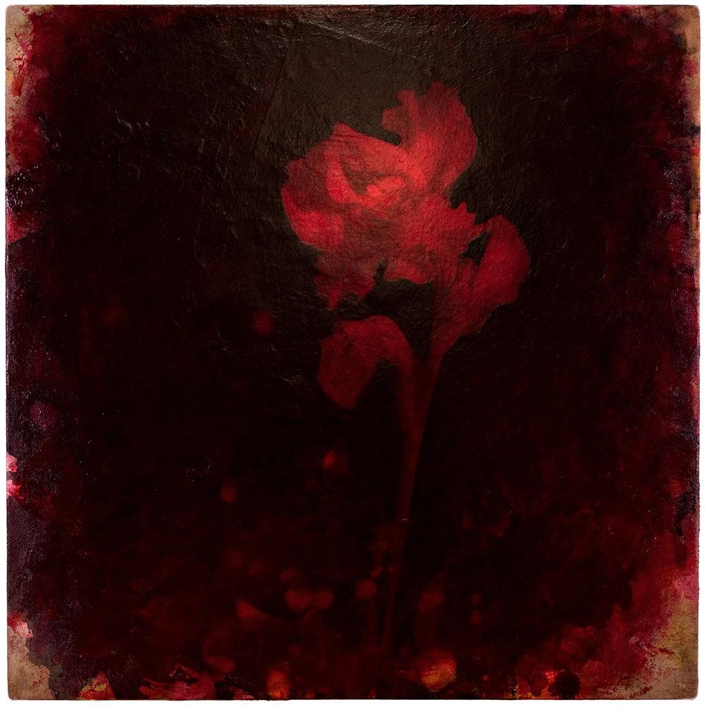 Iris #9, 2005