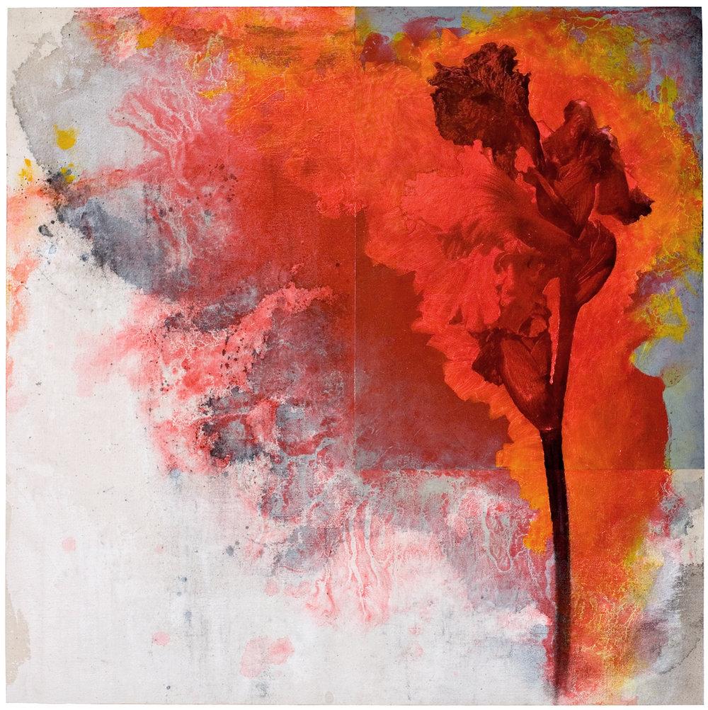 Iris #20, 2006