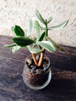 plants at zest