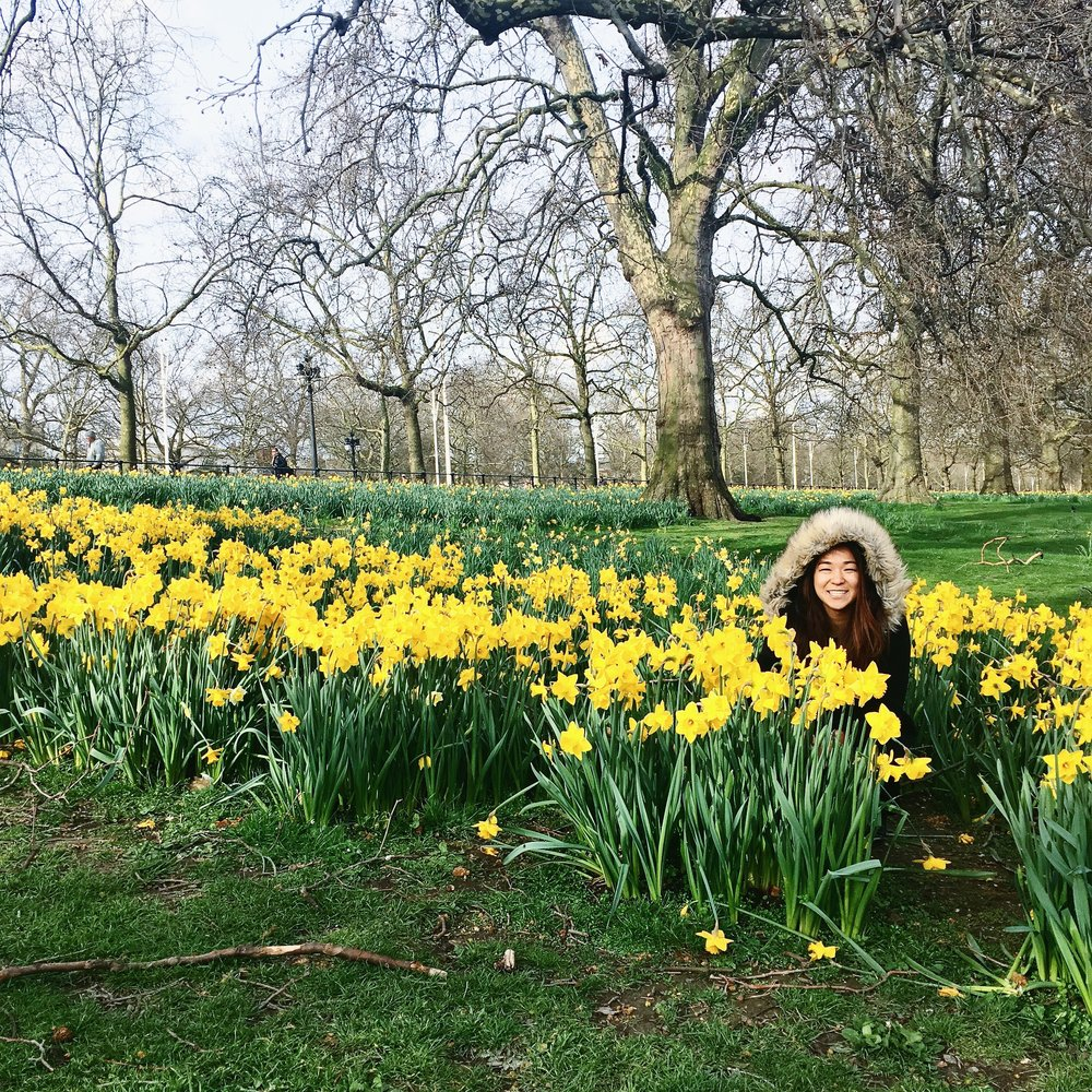 Fulfilling my obsession with daffodils