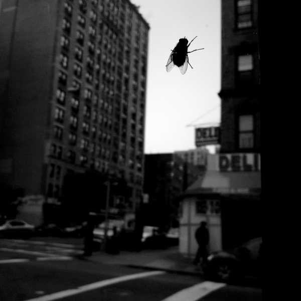 "Kirsti Itameri  The Fly, 2011  Photographic printface mounted on 1/8"" plexiglass, ED. 2/9  10 x 10"""