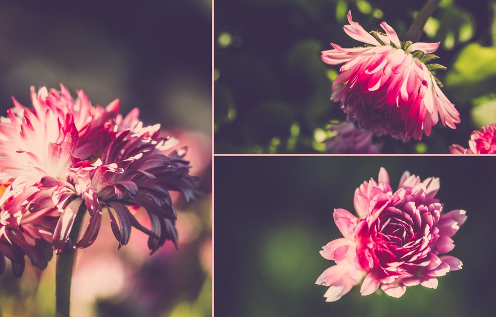 Fleurs-web-7.jpg