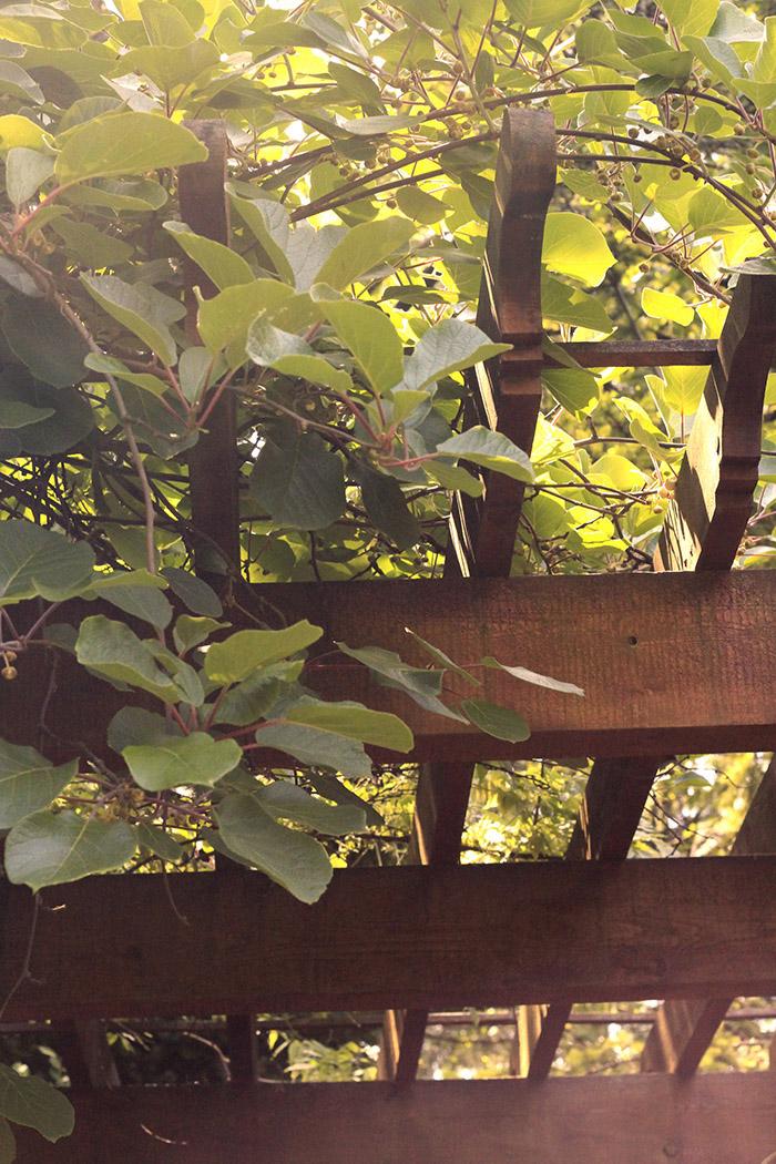700-Wood_7.jpg