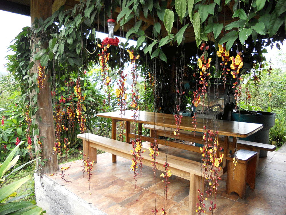 hanging-flowers.png