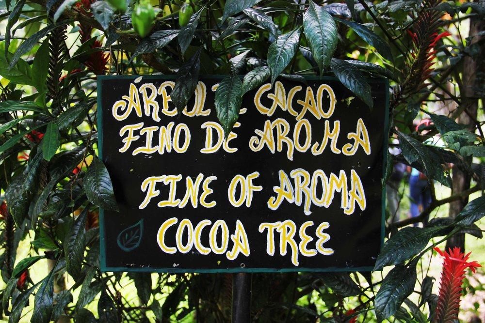 Cacao_Fino_De_Aroma