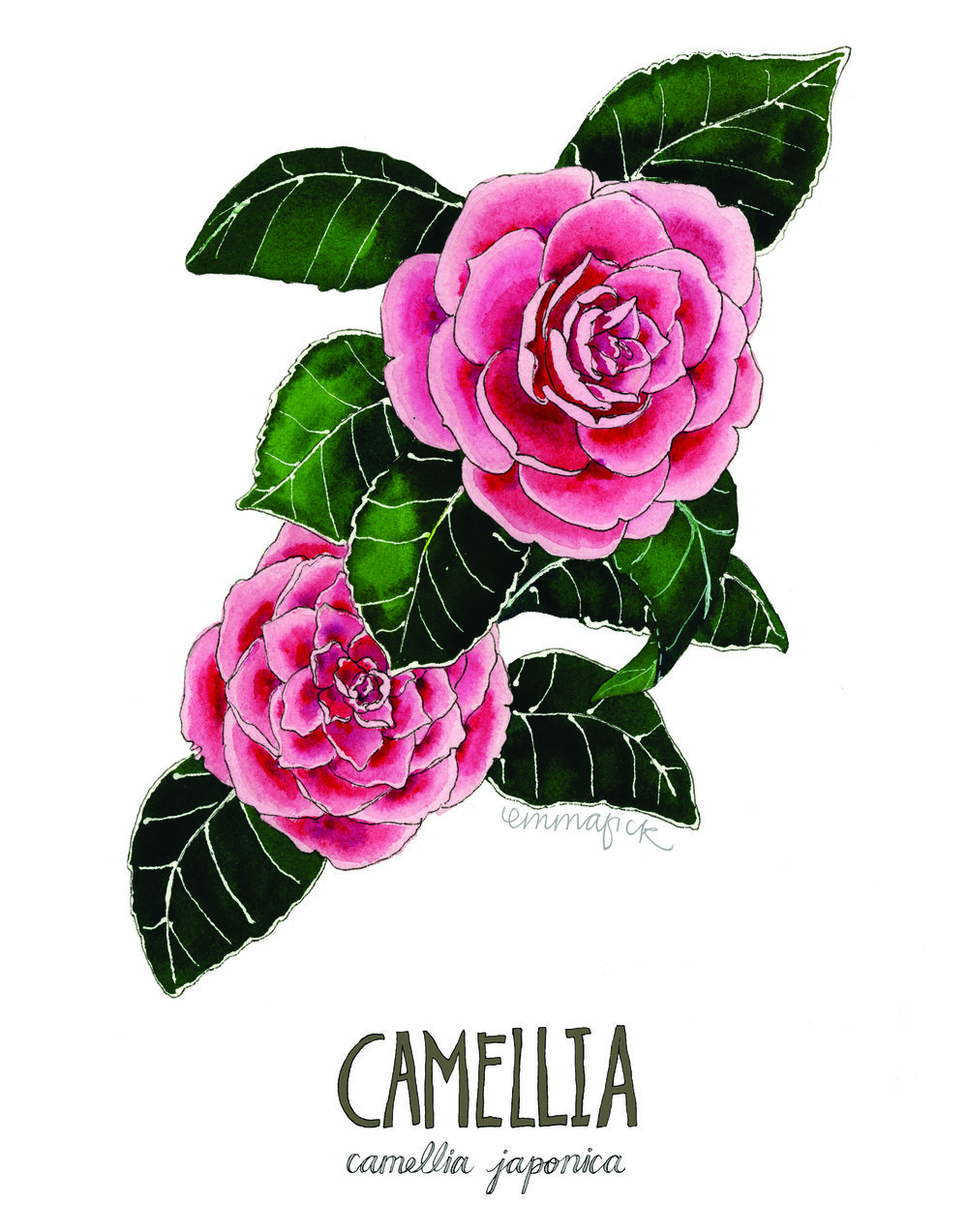 Camellia with signature.jpg