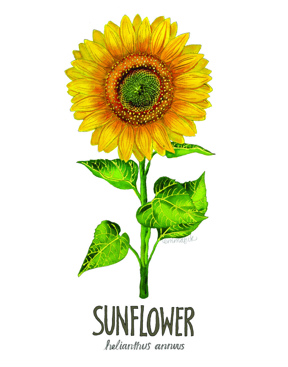 Sunflower with signature.jpg