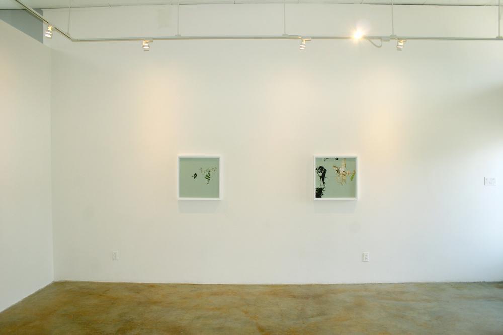 Cryptofloriography (installation view), 2007