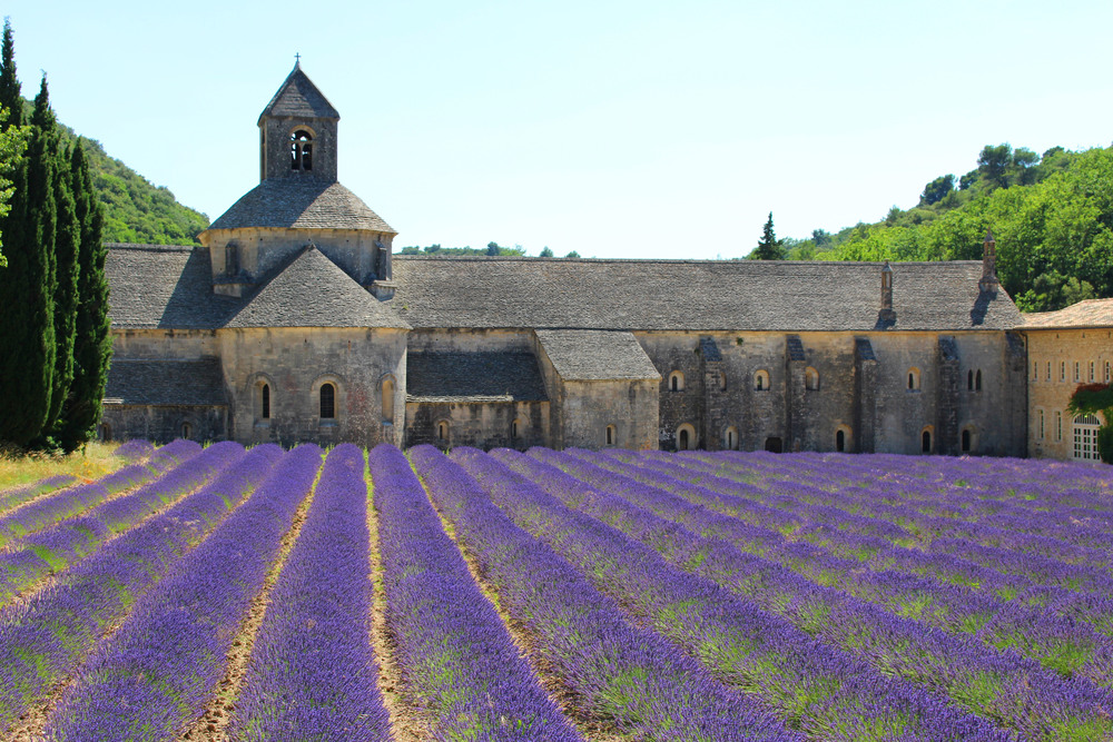 lavendar-fields-in-tote.jpg