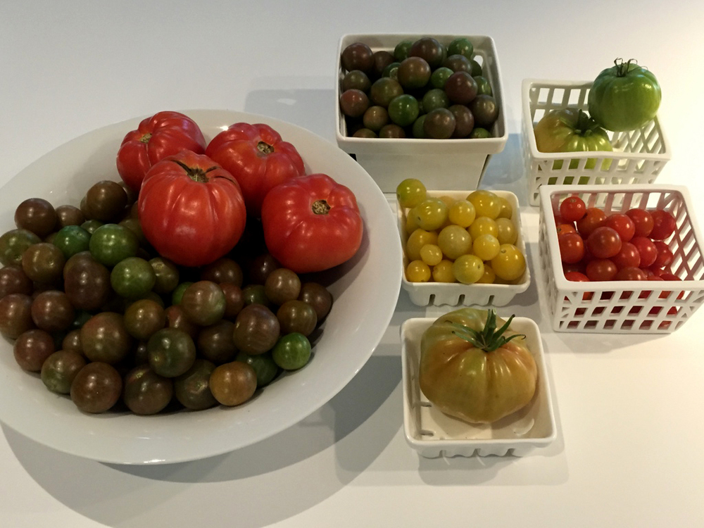 150207 multi-colored tomatoes.jpg
