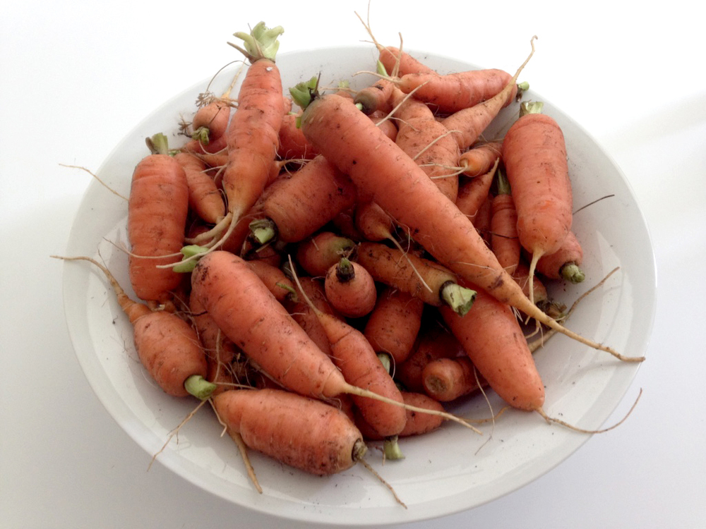 150810 carrots in bowl.jpg