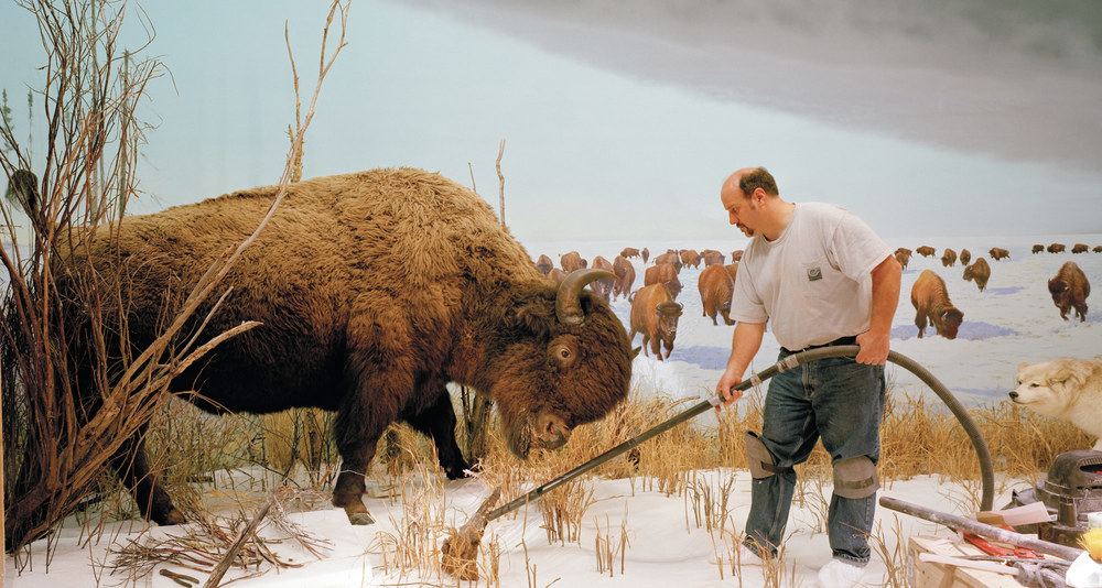 Man_with_Buffalo_2007_CMYK.jpg