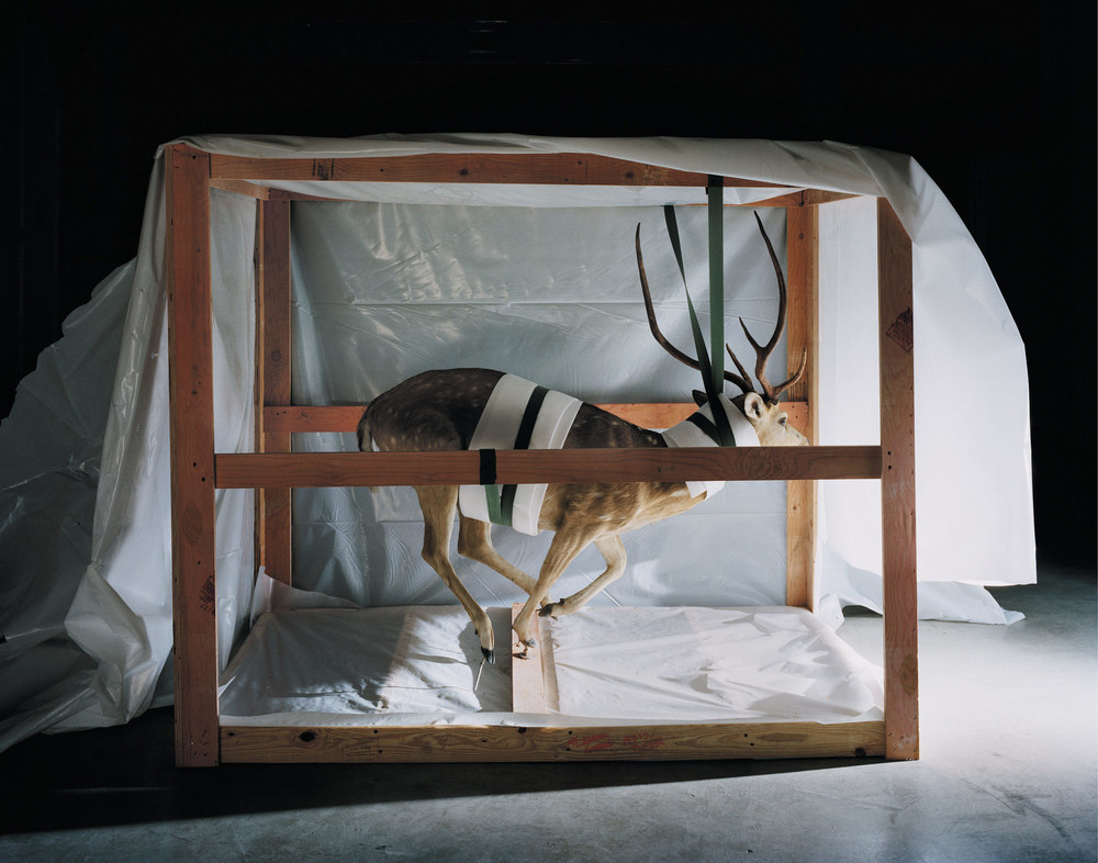 Smithsonian_Deer_2007_CMYK.jpg