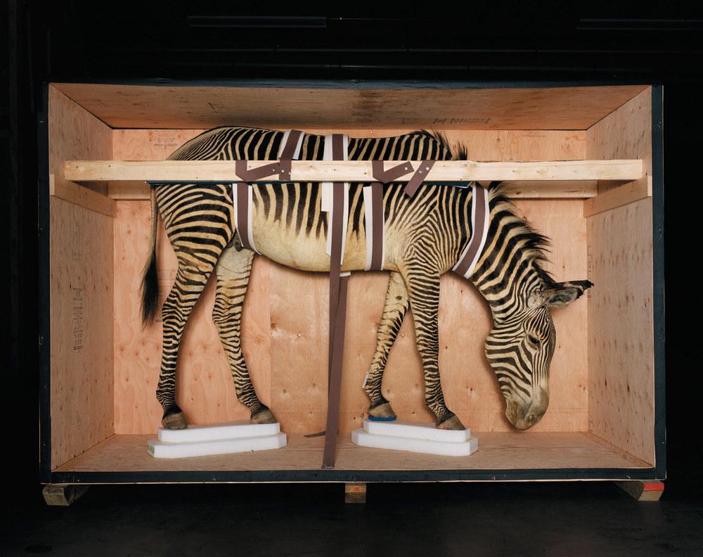 Smithsonian_Zebra_CMYK.jpg