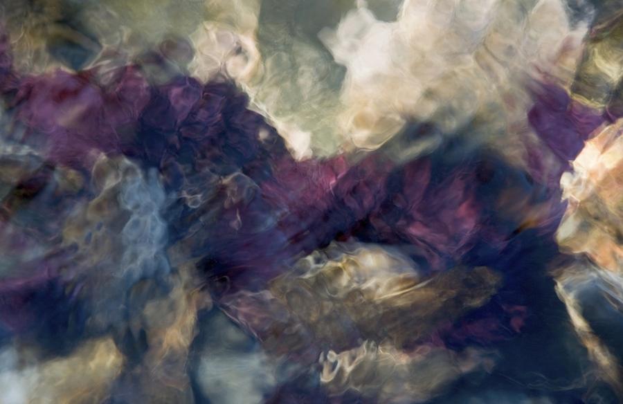 Sea Urchin #3 (2008).jpg