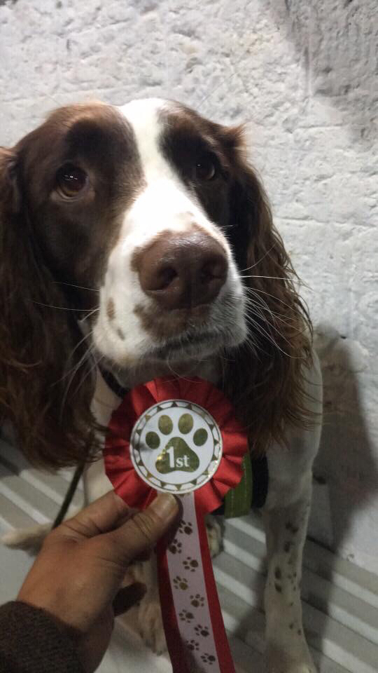 Serve On Search and Rescue dog Molly with her rosette earned in the gun dog category at the Frome Fun Dog Show, backed by @The_Blue_Cross, at @CheeseandGrain