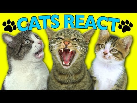Fine Bros - Cats React