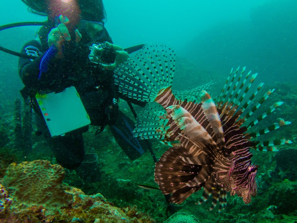 Lionfish Control and Management    How We Help
